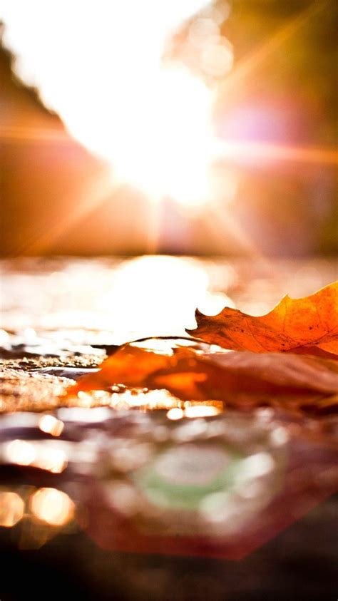 themes iphone s5 wallpaper iphone 6 autumn 4 7 inches