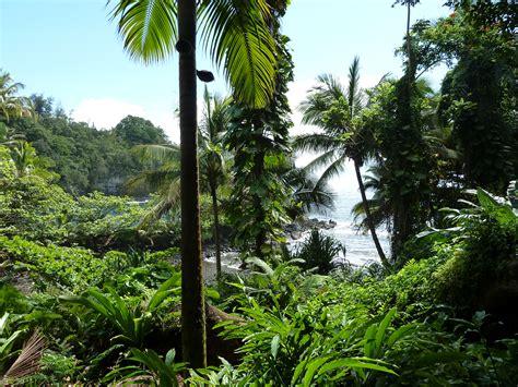 Hawaiian Tropical Botanical Garden Hawaii Donna S Adventures