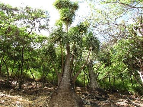 visiting  enchanting koko crater botanical garden