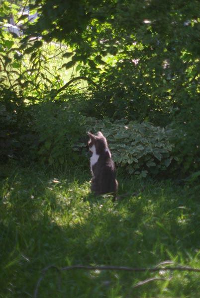 your backyard wildlife habitat begin the creative cat your backyard wildlife habitat sweet
