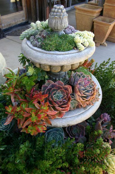 Succulent Container Garden Ideas Succulent Container Gardens Some Design Guidance For Low Water Landscapes In Miniature