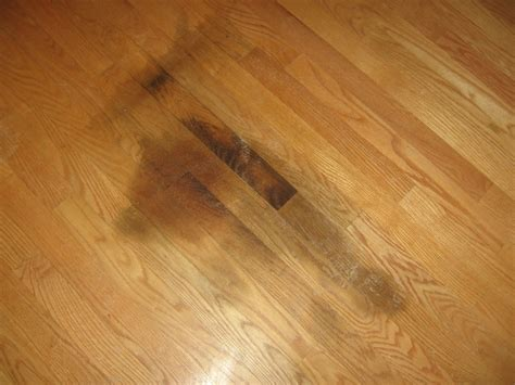Refinish Hardwood Floors Chicago Dustless Refinishing Hardwood Floors In Skokie Chicago Park Ridge