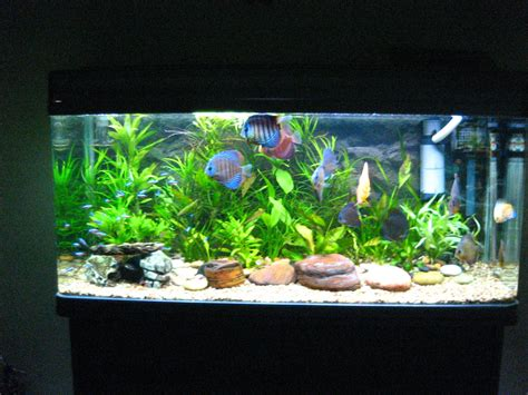 beautiful home fish tanks akvariumų įrengimas ir priežiūra fizomatas lt