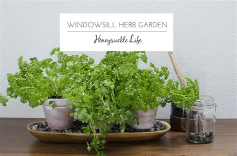 windowsill herb garden windowsill garden smalltowndjs com