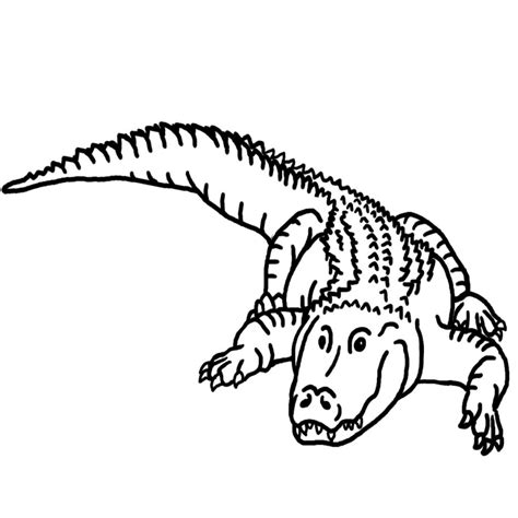 what color are alligators free printable alligator coloring pages for