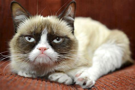Unamused Cat Meme - grumpy cat unamused by endorsement deal new york post