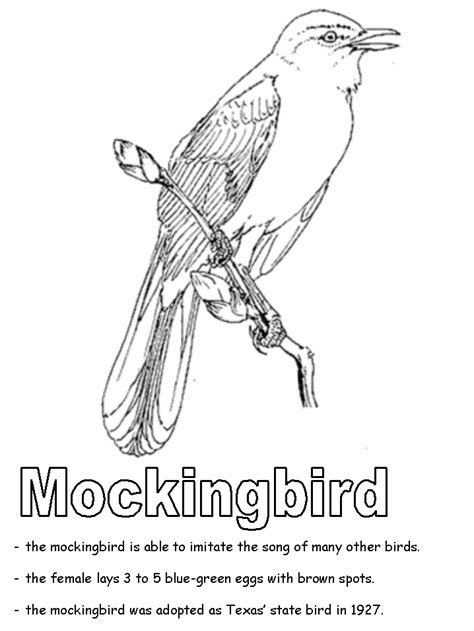 Mockingbird Coloring Page mockingbird coloring page
