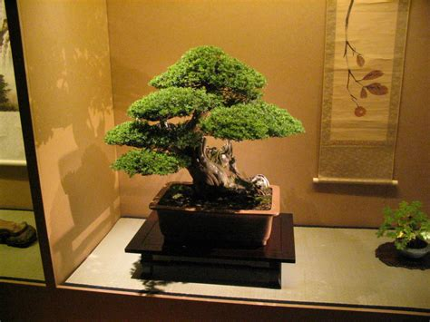 bonsai the beginner s guide to cultivate grow shape and show your bonsai includes history styles of bonsai types of bonsai trees trimming wiring repotting and watering books file bonsai img 6412 jpg