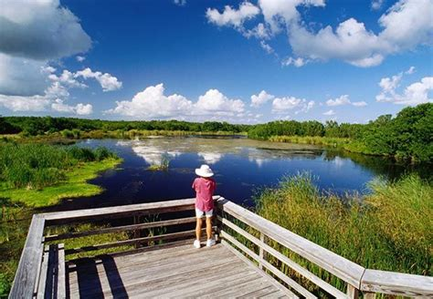 airboat savannah ga 17 best images about everglades national park on pinterest