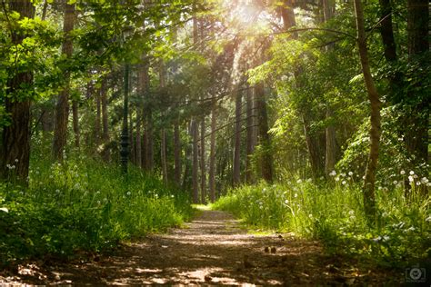 background hutan forest sunlight background high quality free backgrounds