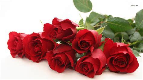 flower expert red and pink roses image flower wallpaper red rose wallpapersafari