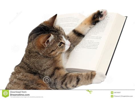 cat picture books cat reading a book royalty free stock