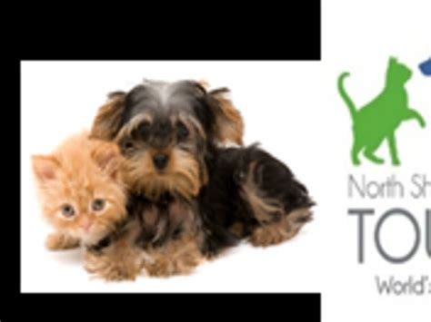 puppy finder nj looking for a puppy find one at pet adoption event sunday toms river nj patch