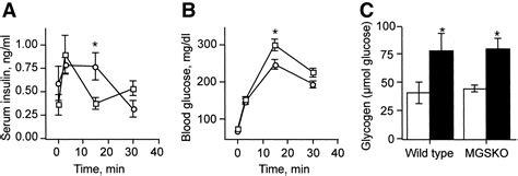 Serum Glucogen glucose metabolism in mice lacking glycogen