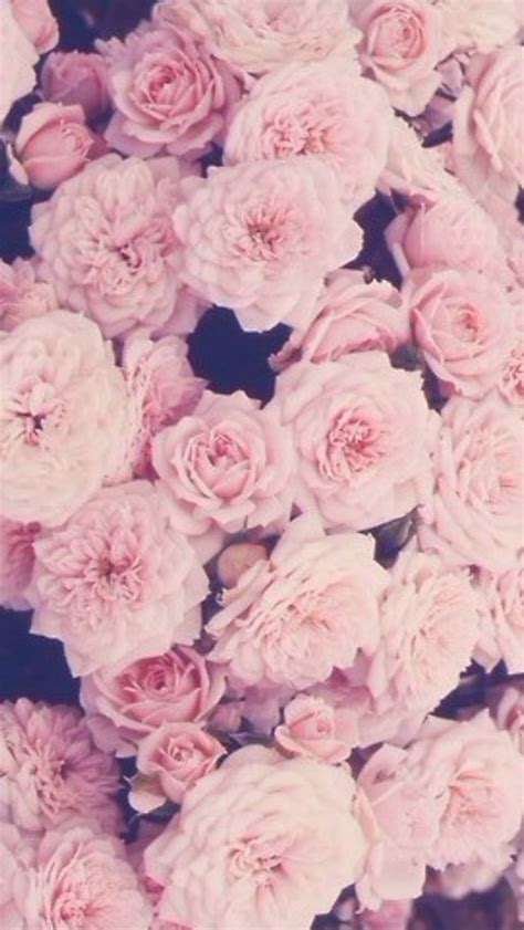 wallpaper for iphone roses pink roses iphone wallpaper flowers pinterest iphone