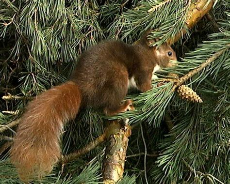 imagenes animales que viven en el bosque imagenes de animales que viven en el bosque imagui