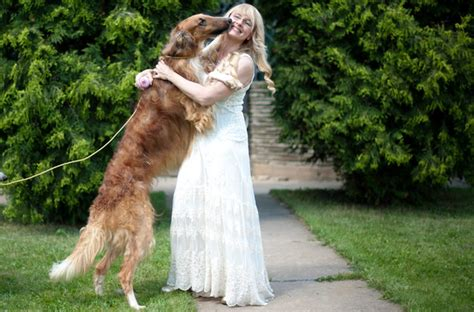 borzoi puppy q a with a borzoi breeder