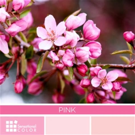 pink color meaning the meaning of the colour pink my web value