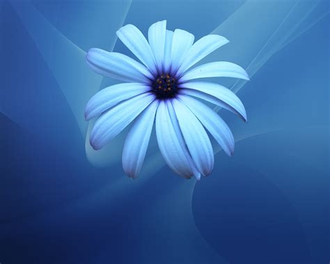 wallpaper flower video blue flower wallpapers asimbaba free software free