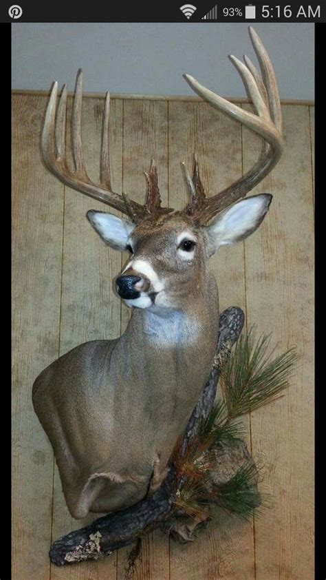 whitetail deer home decor pin by troy jessup on hunting pinterest deer mounts