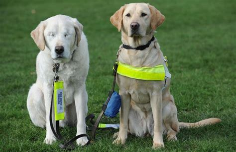 blind dogs blind guide gets helping paw the sun