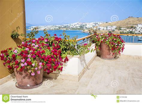 vasi di argilla vasi di argilla con i fiori di fioritura geranio su un
