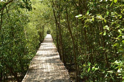 menikmati rimbunnya hutan mengrove wonorejo  surabaya