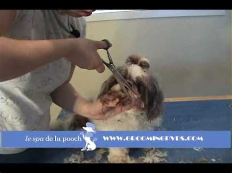 round face dog cut how to groom a shih tzu trim the dog s face cut around