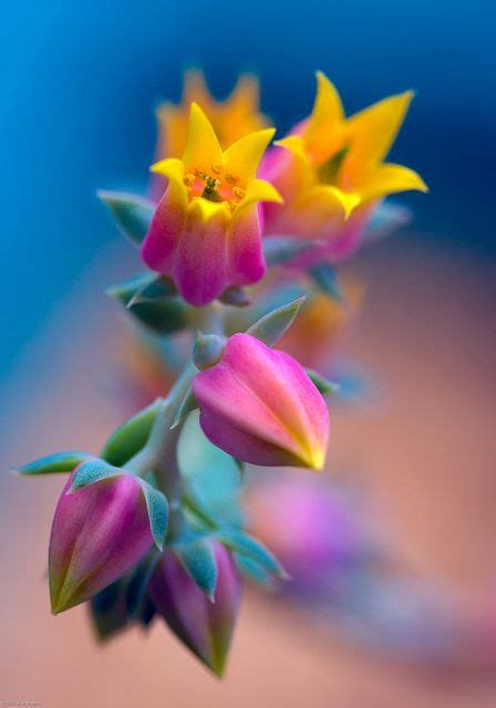 by alan shapiro beautiful flowers pinterest snuggles climbing 17 best images about quot macro quot quot close up quot pics on