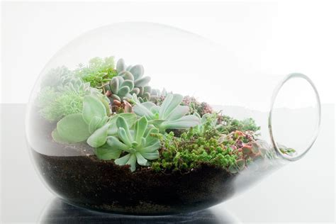Handmade Terrariums - ett 233 studios diy terrarium roundup