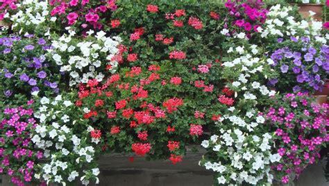 concorso balconi fioriti a cobello di mazara il concorso balconi fioriti alpauno
