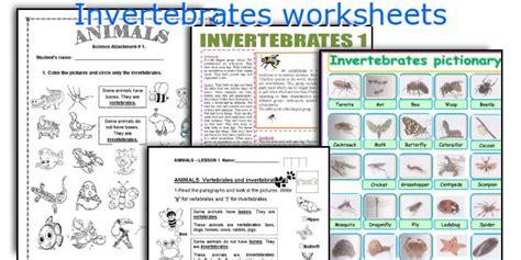 invertebrates worksheets