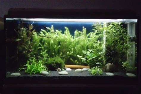 aquascape design englewood fl aquarium dekoration beispiele m 246 belideen