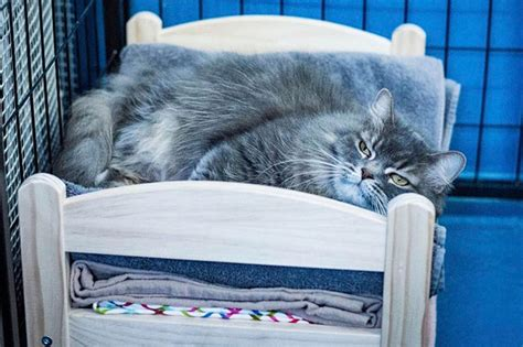 ikea doll bed ikea donates doll beds for shelter cats and it s just too