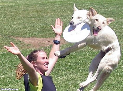 dogs with with two heads catching a frisbee pictures freaking news