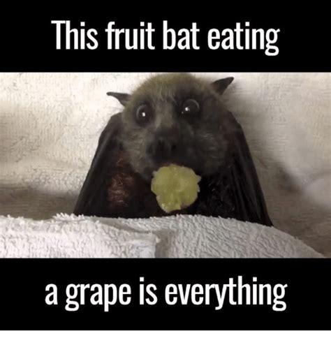 Bat Meme - 25 best memes about fruit bats fruit bats memes