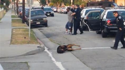 california police officer shoots mans dog  times
