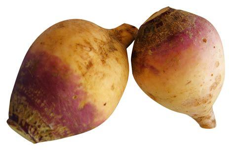 images of rutabaga rutabaga images search