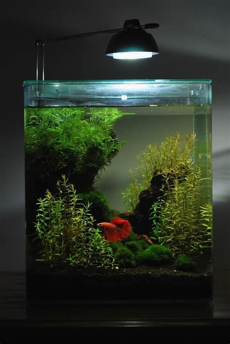 aquarium design betta 324 best ideas about project pond on pinterest garden