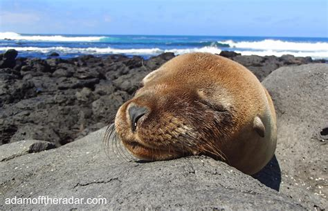 6 Amazing Animals From The Galapagos Islands by 5 Amazing Encounters With Galapagos Animals