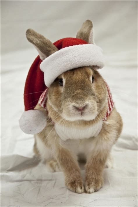 images of christmas rabbits christmas bunny rabbit picture contest 2011 i love my