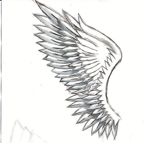 Drawing Wings by Sketches Of Wings Related Keywords Suggestions