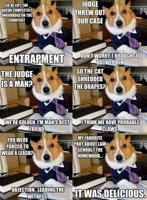 Dog Lawyer Meme - lawyer dog meme meme funny funny pictures dog meme