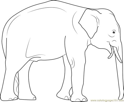asian elephant coloring pages female asian elephant coloring pages