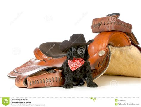 country puppies country stock photo image 31493390