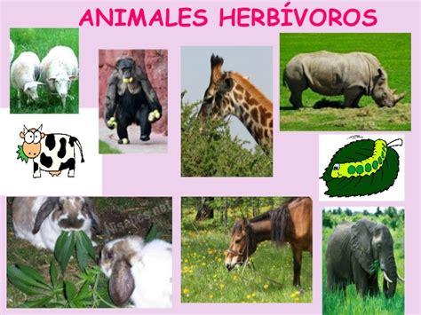 imagenes de animales carniboros animales vertebrados e invertebrados cristyna