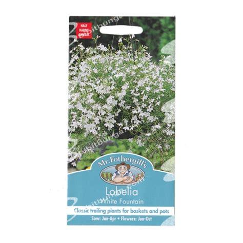 Benih Kangkung A7 New Day Seed benih lobelia white 1500 biji mr fothergills bibitbunga