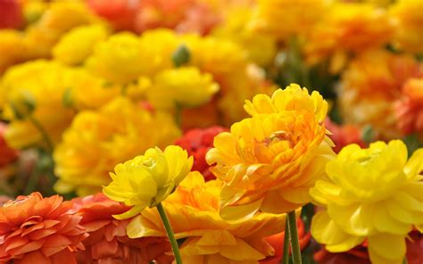 hd themes of flowers yellow red flowers hd hd desktop wallpapers 4k hd