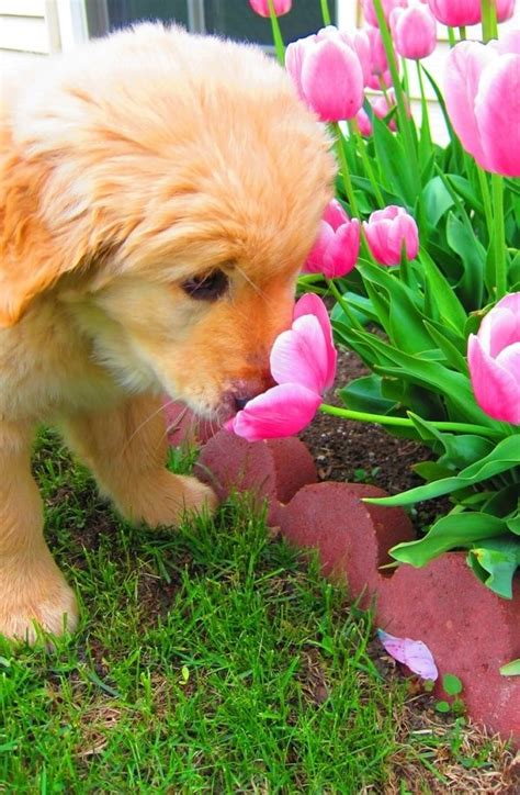puppies and flowers puppy and flower pictures photos and images for and