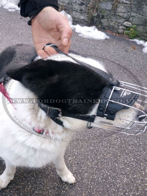 comfortable muzzles for dogs best large dog muzzle basket cage muzzle for large dogs